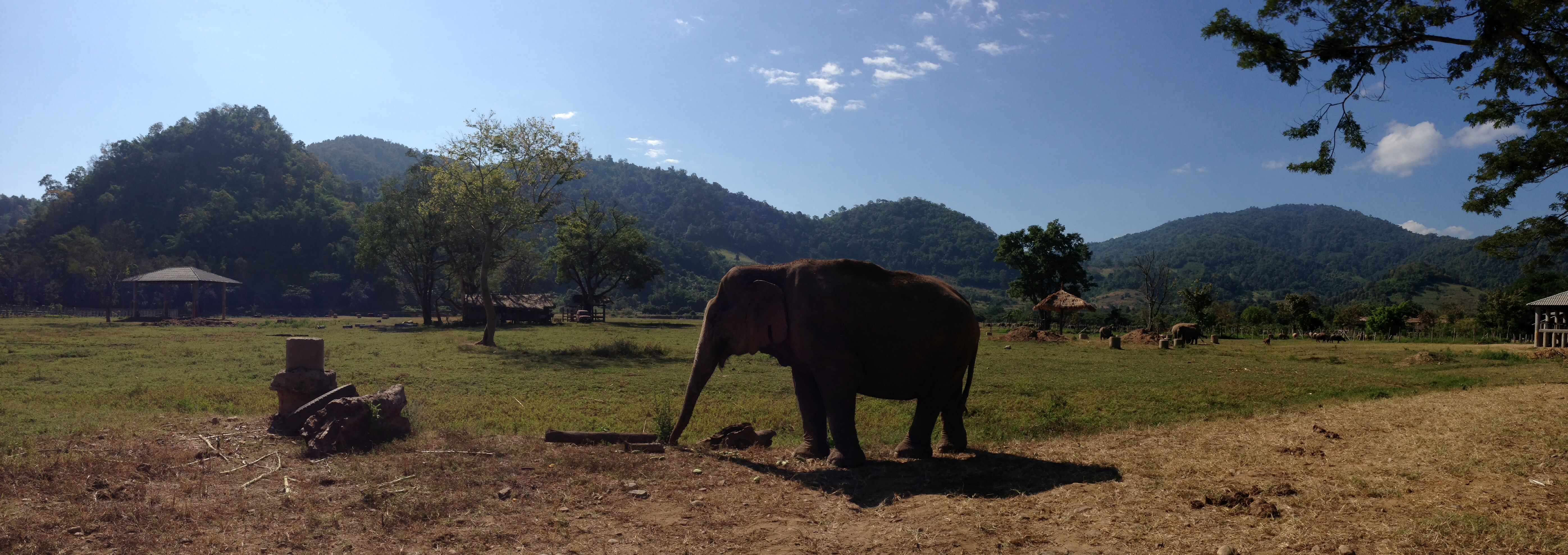 Visiting the Elephant Nature Park in Chiang Mai, Thailand