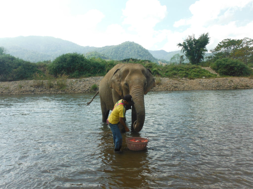 Mahout with elephant at elephant nature park in chiang mai