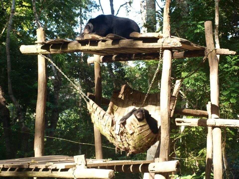 Bear Rescue Laos