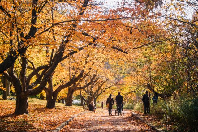Photo Credit: ilovetoronto.com
