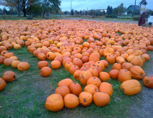 Pumpkin patch near Toronto in the fall