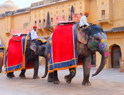Painted elephant in India while on India and Nepal tour