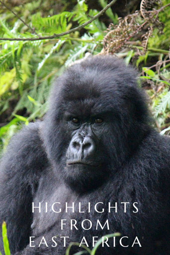 A pin of gorillas showcasing my highlights from my East Africa travel tour.