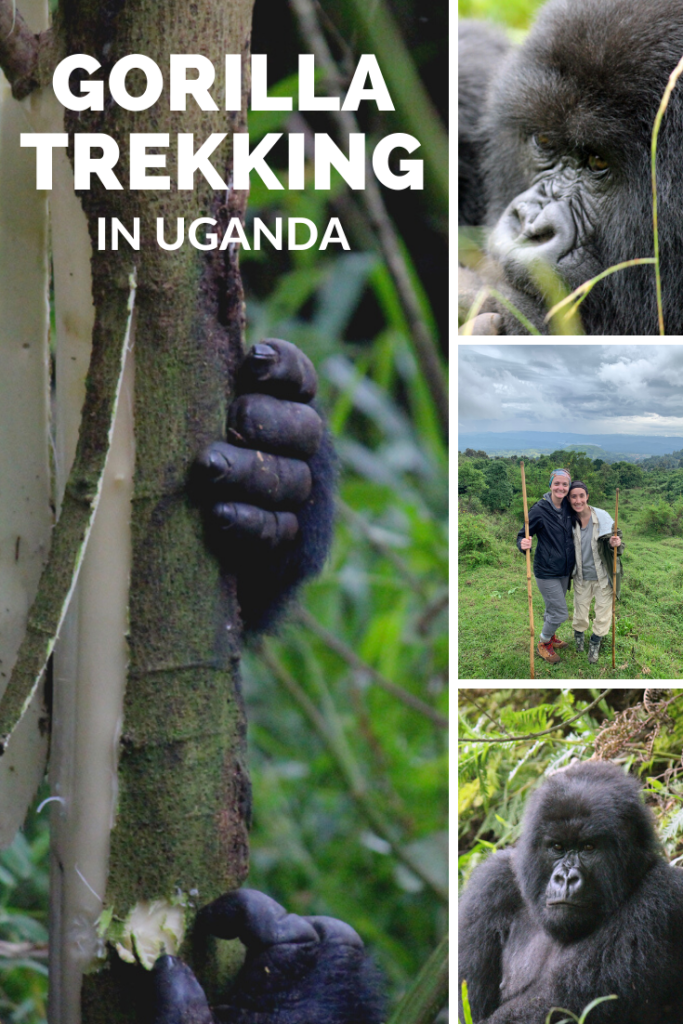 A pin for mountain gorilla trekking in East Africa.