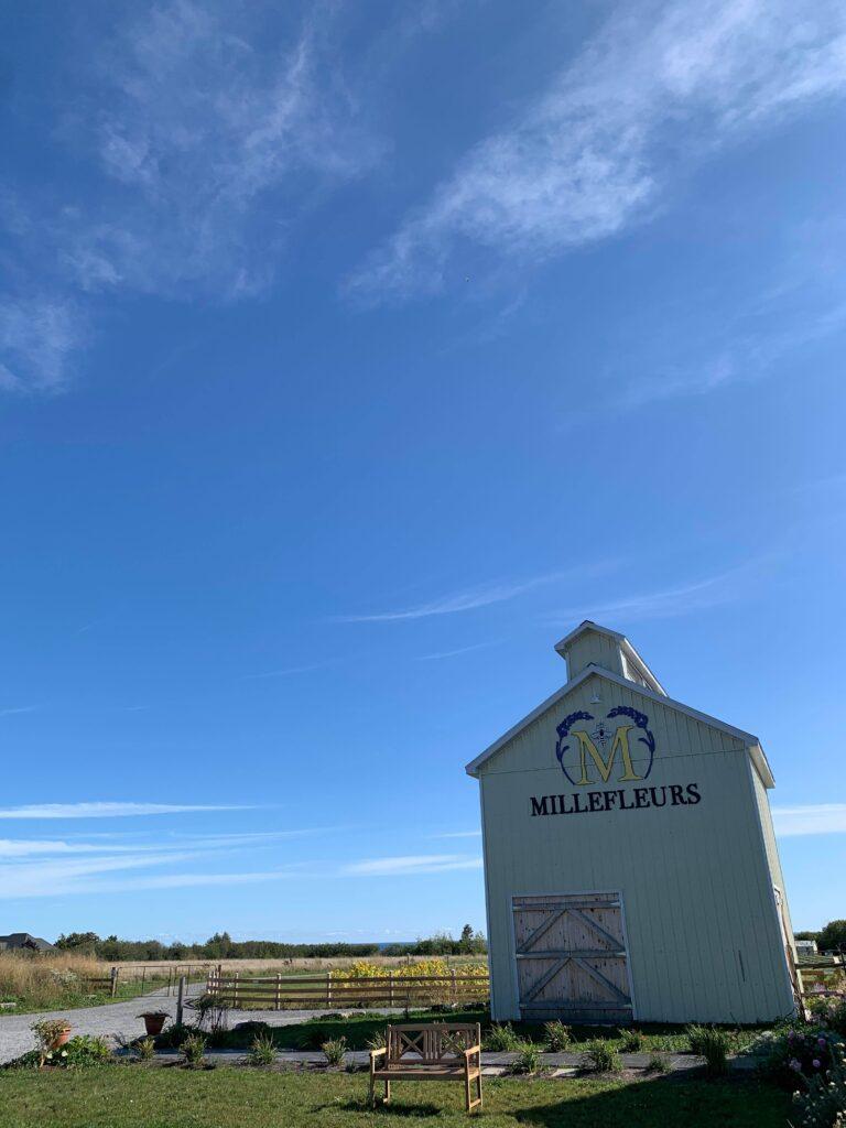 Millefleurs, a lavender farm in Prince Edward County, Ontario