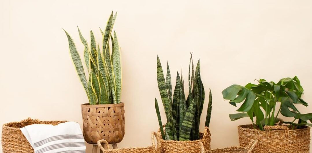 A variety of house plants from Foli, a Canadian business to support at Christmas.